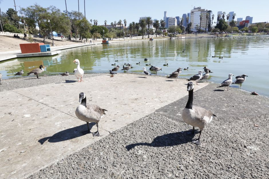 They find body floating in the lake of the legendary MacArthur Park in Los Angeles